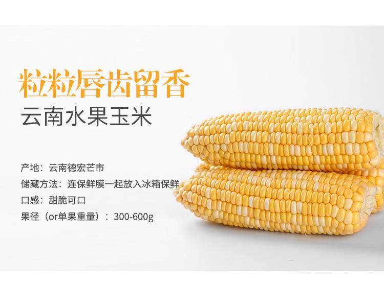 【5斤装】云南特产水果玉米现摘新鲜甜脆甜玉米棒甜脆爆浆嫩非糯玉米笨棒