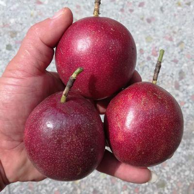 百香果5斤3斤2斤广西新鲜大果纯正香西番莲现摘【收藏送开果器】
