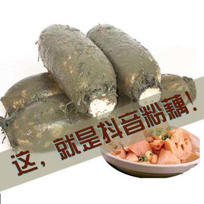 湖北粉藕蔬菜莲藕新鲜荆州洪湖特产5斤包邮煲汤藕糯米藕现挖现发