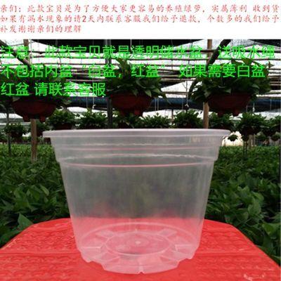 种菜盆塑料橘子树盆栽桃蛋多肉盆景花卉木糠杯绿植花架子花盆特大