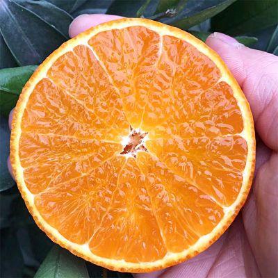 现摘四川丹棱爱媛38号果冻橙新鲜水果橘子手剥橙子脐橙桔子多规格