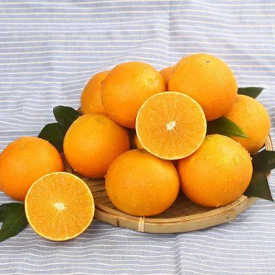 现货爱媛38号果冻橙子水果冻橙子夏橙子手剥橙新鲜水果径50-90mm