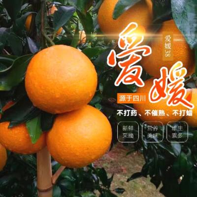 四川果冻橙爱媛38红美人