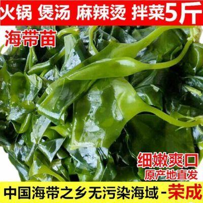 1斤/2斤/5斤海带苗荣成野生珊瑚菜海藻海带批发麻辣烫火锅海带芽