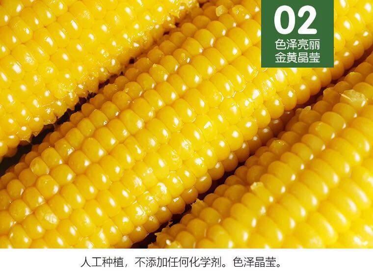 【黄白黑混搭8根】新鲜糯玉米棒真空装粘黏玉米粗粮早餐代餐3根