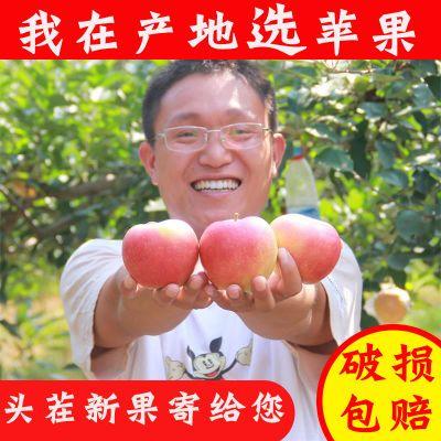 【特�r���】山西�O果�t富士5斤10斤�b�t富士新�r水果水果