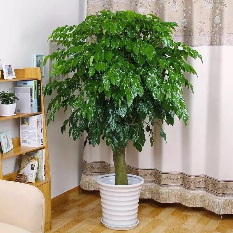 在客廳中保存什么樣的植物是好的,耐熱和耐寒的環境