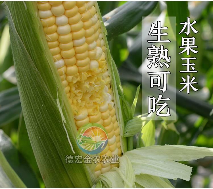 【买2送1共9斤】云南新鲜水果爆浆甜脆玉米棒单果200-400g)可以生吃