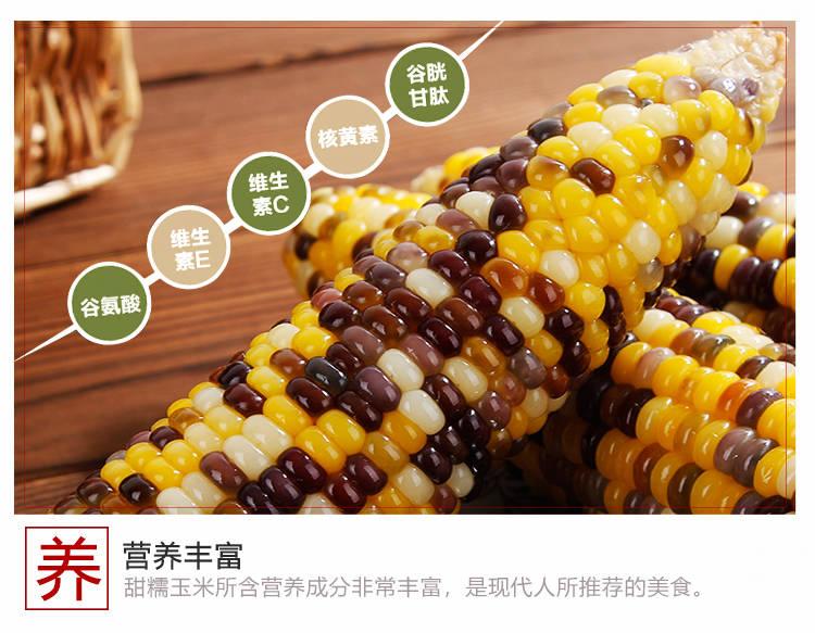 张家口新鲜甜糯玉米棒粒现摘粘玉米粒微甜袋装非转基因粗粮6穗8穗