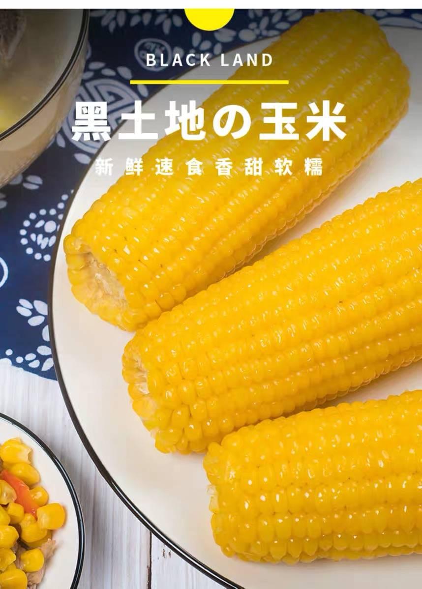 东北甜糯真空黄粘玉米棒8根2000克新糯玉米真空包装黑糯微波加热