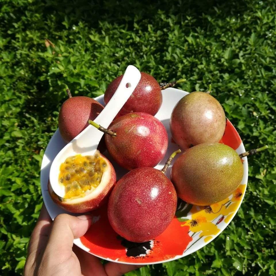 【送开果器】广西百香果新鲜水果2/3/5斤12/8个装大果单果40-100g