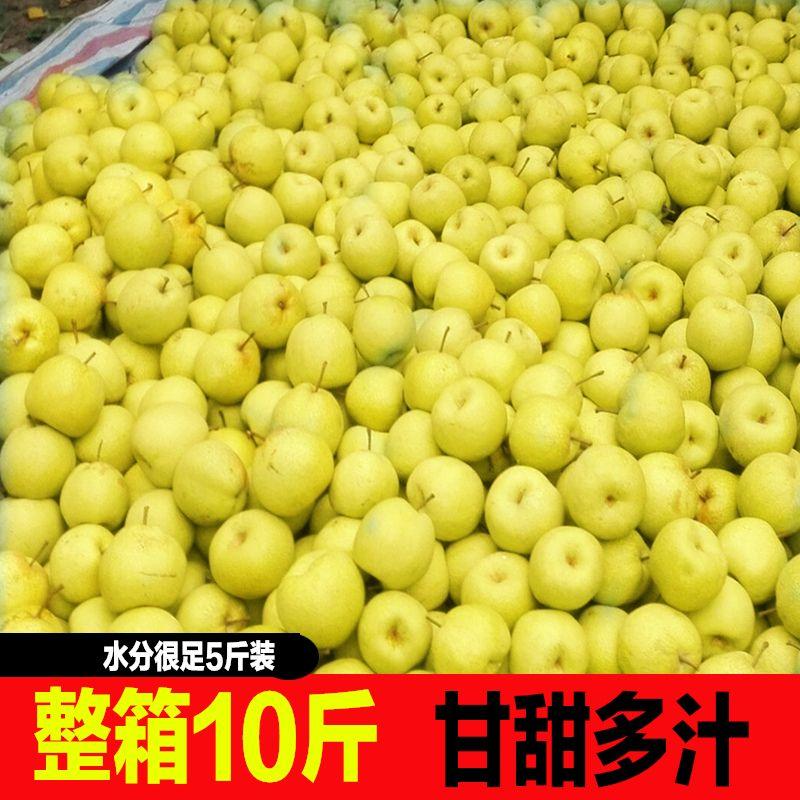 梨子新鲜水果10斤带箱现摘百年皇冠梨青梨苹果梨砀山白酥梨5斤ab