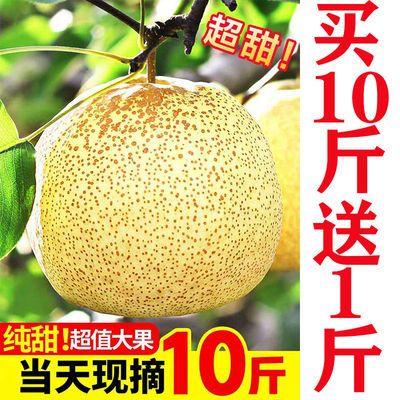 砀山梨子10斤新鲜水果白酥梨贡梨5斤百年梨树非皇冠梨青梨丰水梨