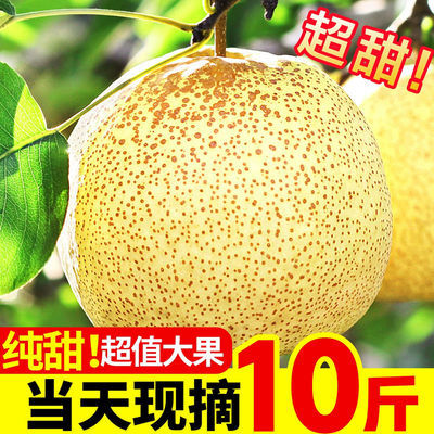 砀山酥梨正宗梨子水果批发水果新鲜 应季水果贡梨皇冠梨孕妇水果