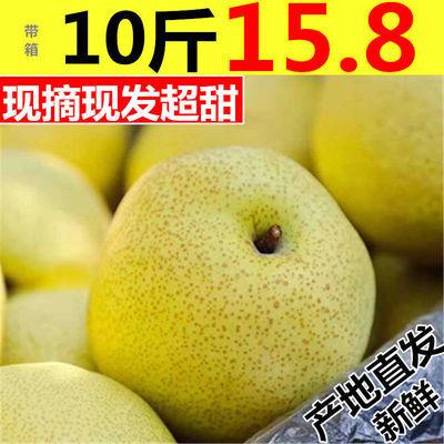 砀山酥梨百年梨树现摘酥梨雪梨新鲜梨子水果砀山梨香梨带箱5/10斤
