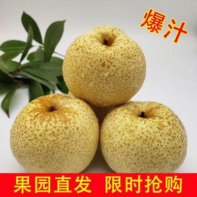砀山酥梨5/10斤包邮百年梨树新鲜水果现摘梨子非皇冠梨丰水梨雪梨