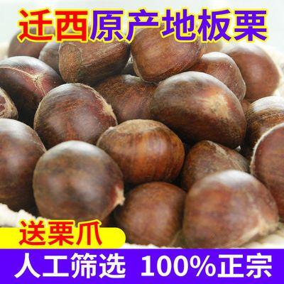 迁西板栗鲜栗子新下树5斤油栗子即食小板栗生栗子新鲜野生品种1斤