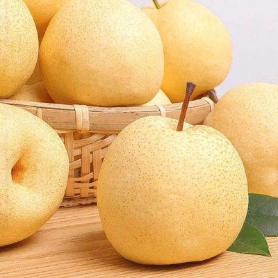 正宗酥梨砀山梨贡梨现摘梨子香梨雪梨应季水果梨新鲜整箱包邮