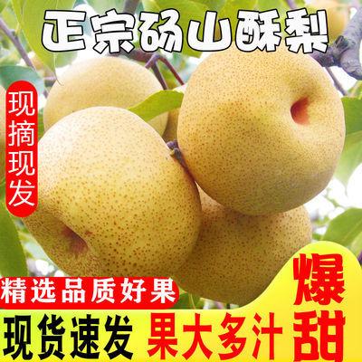 正宗酥梨砀山梨贡梨5斤现摘梨子香梨雪梨应季水果梨新鲜整箱10斤