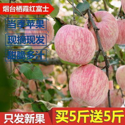 苹果水果新摘苹果山东烟台栖霞产地直发正宗红富士批发3斤5斤10斤