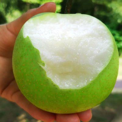 砀山梨皇冠梨酥梨5/10斤水果新鲜现摘现发当季水果梨子水果批发
