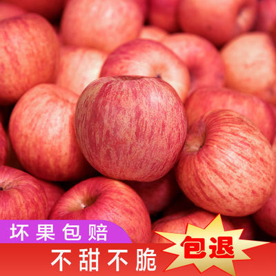 正宗红富士苹果烟台栖霞当季时令新鲜水果现摘现发不打蜡果香甜脆