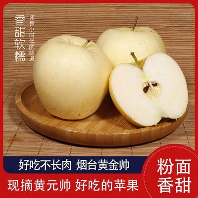 黄金帅烟台苹果现摘新鲜面黄香蕉当季水果黄元帅3/5/10斤整箱批发