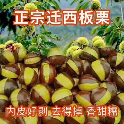 【20年新货】野生新鲜迁西板栗油栗特大中果专供生鲜糖炒栗子包邮