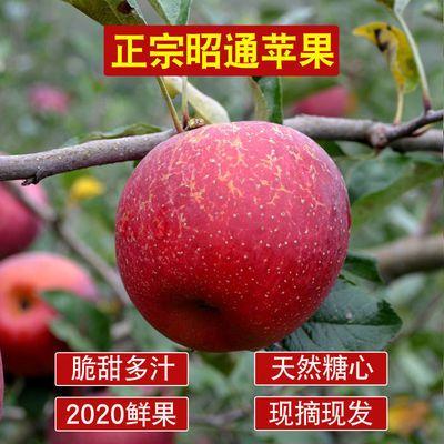 云南昭通脆甜丑苹果野生冰糖心富士丑苹果孕妇儿童可食用昭通苹果