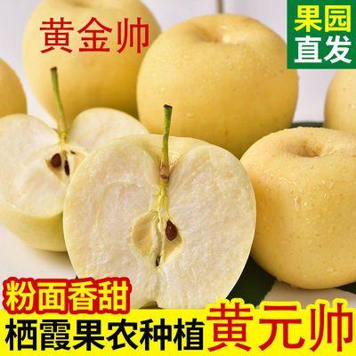 烟台黄元帅金帅苹果水果新鲜粉面3斤5斤