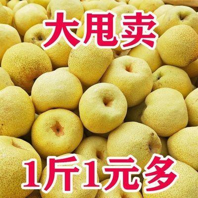 安徽砀山酥梨新鲜现摘正宗梨子5斤-10斤批发孕妇水果包邮雪梨贡梨