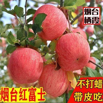 烟台栖霞红富士苹果当季新鲜水果整箱批发脆甜平果多汁不打蜡