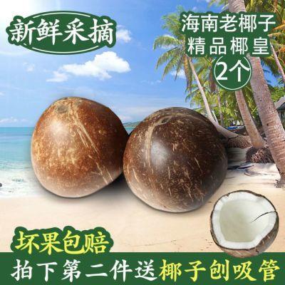 海南当季孕妇新鲜水果煲汤老椰子椰皇椰汁抛光去皮毛椰椰王包邮