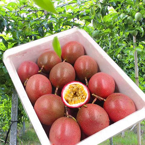 广西百香果5斤特大果70-100g大果50-80g新鲜水果1/2/3/10斤批发