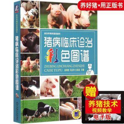 猪病临床诊治彩色图谱 养猪技术从入门到精通书籍 猪病学书籍