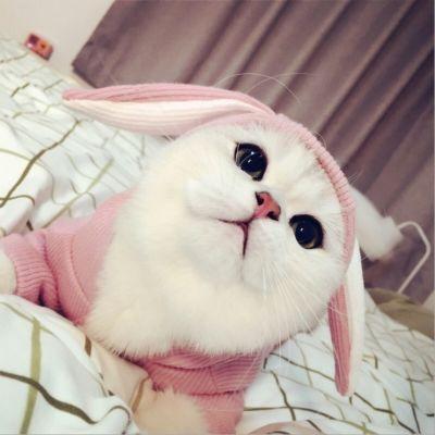 潮秋冬装新款狗狗衣服比熊泰迪法斗猫咪小狗宠物服饰夏装薄款兔耳