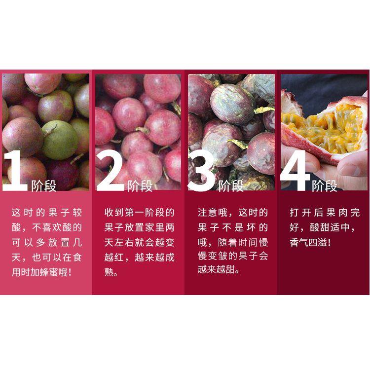 广西百香果5斤装现摘新鲜水果包邮西番莲精选酸甜多汁大果鸡蛋果_4