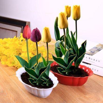 【买一送四】郁金香种球风信子种子花卉芍药百合风信子开花种子