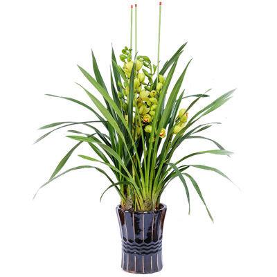 蕙兰花苗盆栽室内花卉绿植庭院阳台观花植物水培四季好养带花盆景