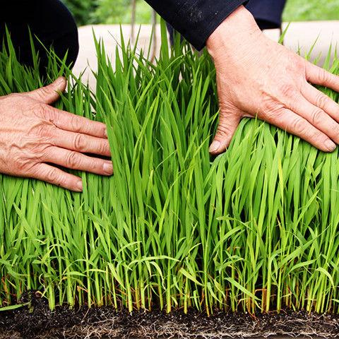 营养土通用种菜土花土养花种花种植蔬菜多肉土专用泥土肥料的细节图片6