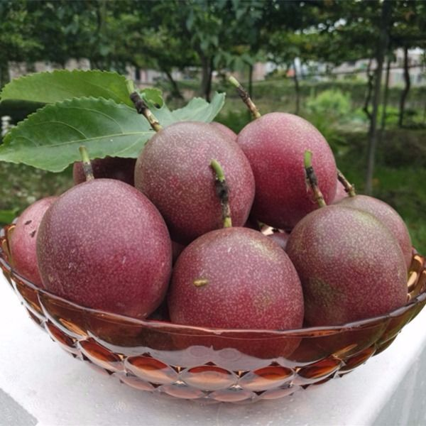 广西百香果5新鲜包邮白香果大果带箱6斤装一级西番莲10现摘鸡蛋果_3