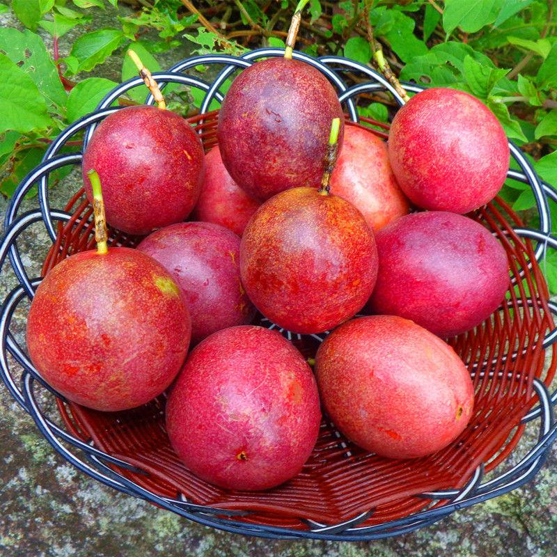 广西百香果5新鲜包邮白香果大果带箱6斤装一级西番莲10现摘鸡蛋果_2