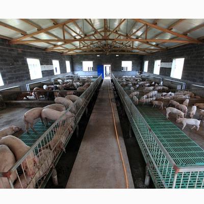 养猪技术大全视频 养猪病防治 生态养猪技术视频3书籍12光盘
