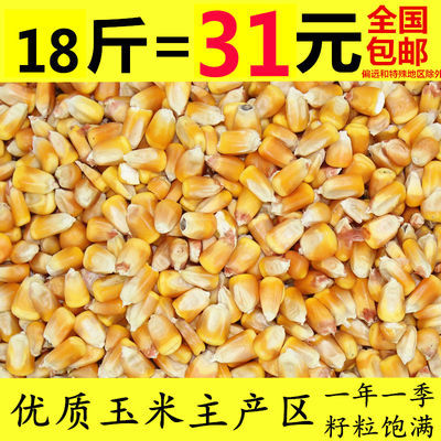 普通玉米农家自产干玉米粒玉米籽粗粮鸽子鸡鸭鸟宠物饲料包邮