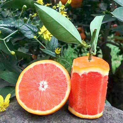 《亏本赚好评》中华红橙血橙红心橙 5/2斤现摘新鲜当季新鲜水果