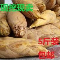 [特惠小笋5斤装]冬笋新鲜现挖农家野生蔬菜 毛竹笋小春笋湖南黄泥