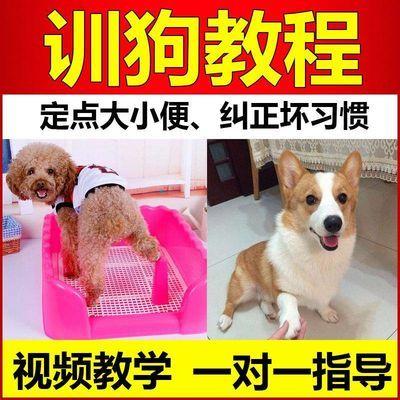 2018全套训狗教程视频大全训犬师一对一指导训练狗狗训犬训练方法