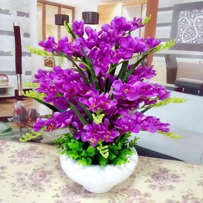 蝴蝶兰花苗大苗盆栽花卉大花绿植四季开花室内植物兰花君子兰苗