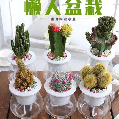 绿萝盆栽室内墙壁挂绿萝花盆自吸水绿萝懒人盆栽自动吸水绿箩植物