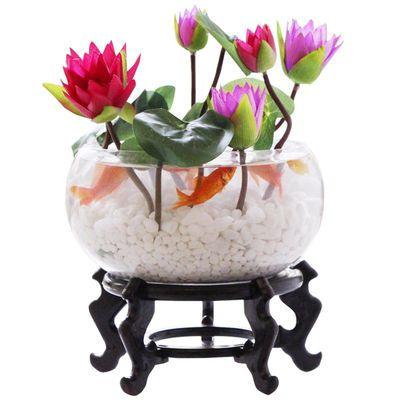 睡莲碗莲荷花卉种子四季种蔬菜盆栽室内花卉绿植绿萝水培植物好养